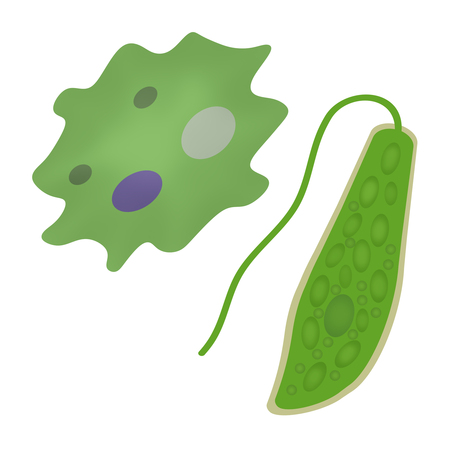 Amoeba and an euglena
