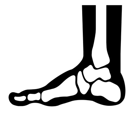 Bone of a leg Reklamní fotografie