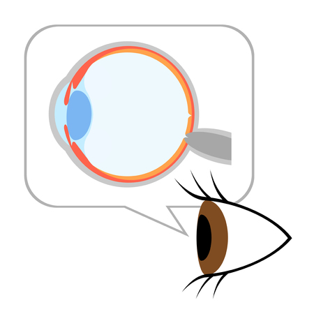 The structure of the eye