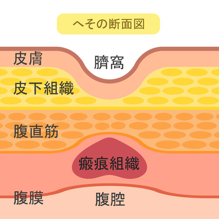 The structure of the navel 写真素材
