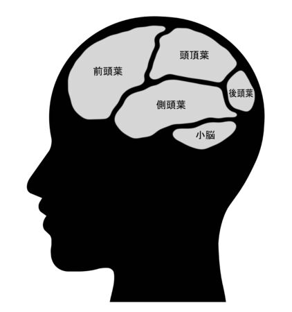 The name of the cerebral parts