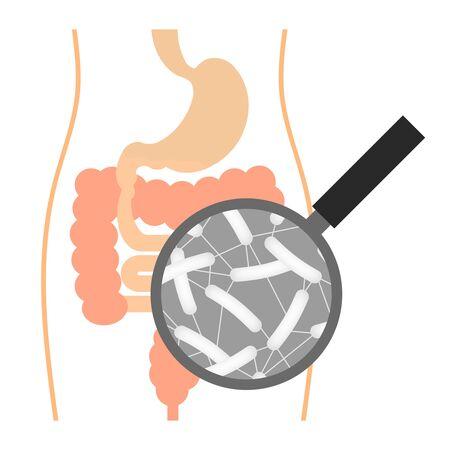 Colon bacillus Imagens