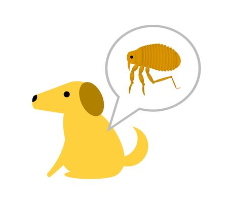 Fleas that parasitize dogs 写真素材