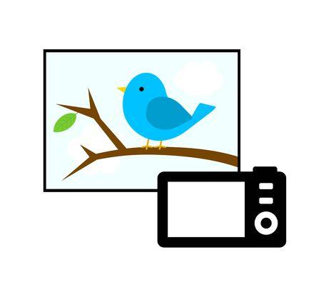 Taking a little bird with a digital camera. Stock fotó