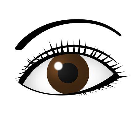 Eye and eyebrows Imagens