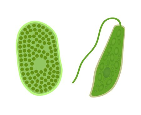 Chlorella and Euglena
