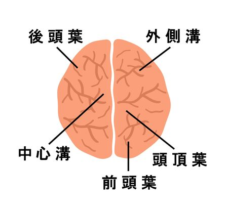 Brain as Seen from the Top. Reklamní fotografie