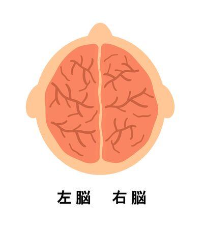 Right brain and left brain.