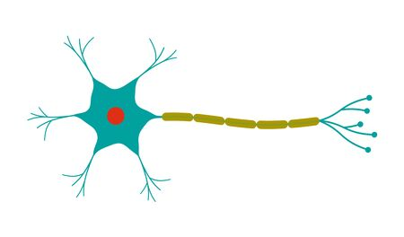The Shape of the Neuron. Imagens