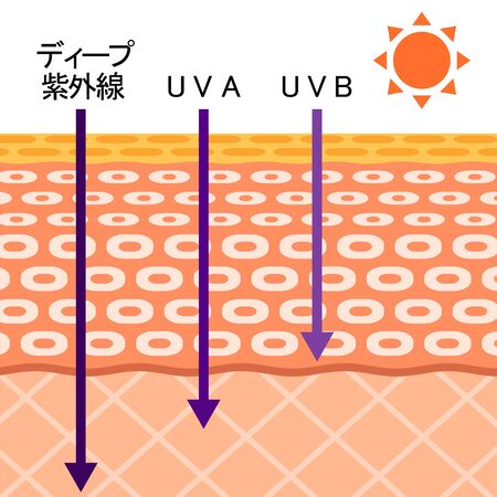 Relationship between skin and ultraviolet ray