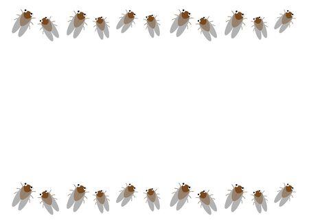 Frame of the balm cricket
