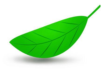 A piece of green leaf
