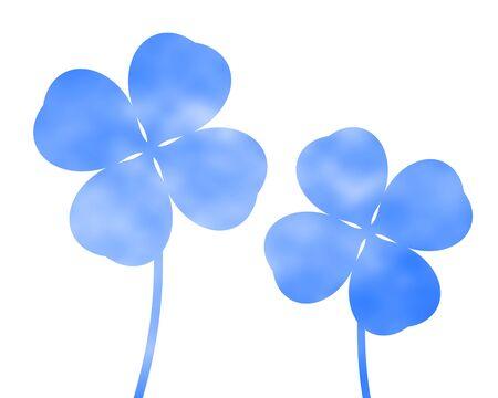 Sky blue clover 写真素材