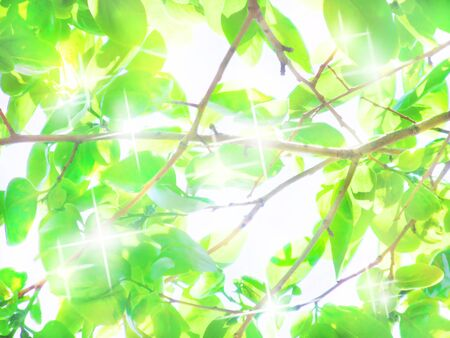 The green leaves are shining