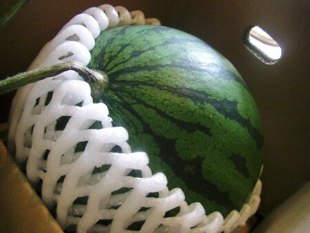 It is a watermelon in a cardboard 版權商用圖片