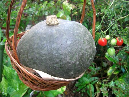 Pumpkin is in the basket