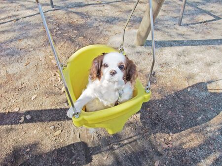 A dog relaxing on a swing