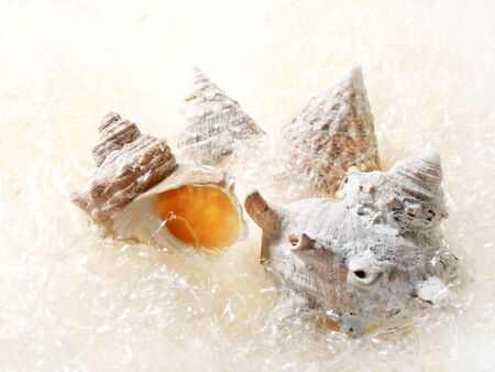 Shellfish such as turban shell Banco de Imagens