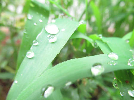Weeds are wet with rain 版權商用圖片