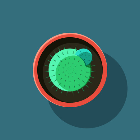 waterless: Top view. A cactus in flat style. Vector