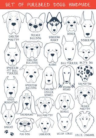 異なる品種の 24 の犬のセット