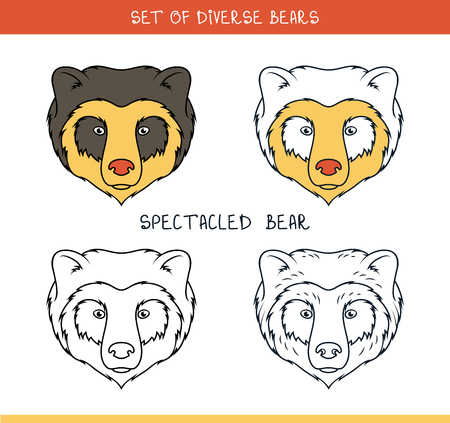 spectacled: Spectacled bear. Set isolated heads of bear in color, lines. Heads for design. Template of heads. Hipster style. Animation bear. Elements for labels and advertizing production. Print for the press