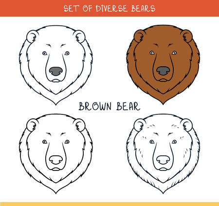 cruel zoo: Brown grizzly bear. Set isolated heads of bear in color, lines. Heads for design. Template of heads. Hipster style. Animation bear. Elements for labels and advertizing production. Print for the press