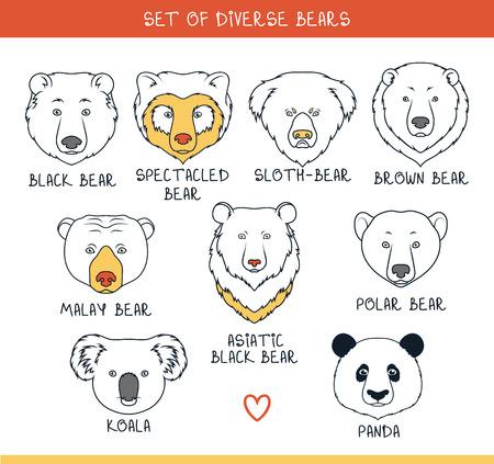 oso: Conjunto de 9 bozales lleva hecha a mano en el estilo lineal. Rostros de osos. Osos de color. Razas de osos. Las especies de osos. Oso negro americano. Tenga set. Oso de anteojos. Oso asi�tico. Panda, koala