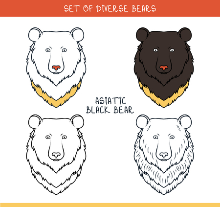 asiatic: Asiatic black bear. Set isolated heads of bear in color, lines. Heads for design. Templates of heads. Hipster style. Animation bear. Elements for labels and advertizing production. Print for the press