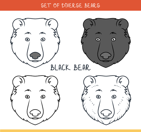 oso negro: Oso negro. Conjunto de cabezas aisladas de oso en el color, líneas. Jefes de diseño. Plantillas de cabezas. Estilo inconformista. Oso de Animación. Elementos de las etiquetas y de producción publicitaria. Imprimir para la prensa