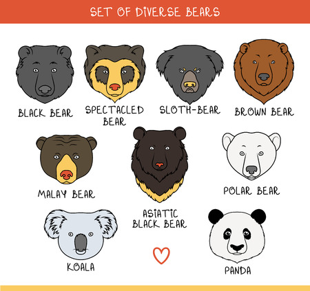 Set of 9 muzzles bears handmade in linear style. Faces of bears. Color bears. Breeds of bears. Species of bears. American black bear. Bear set. Spectacled Bear. Asiatic bear. Panda, koala