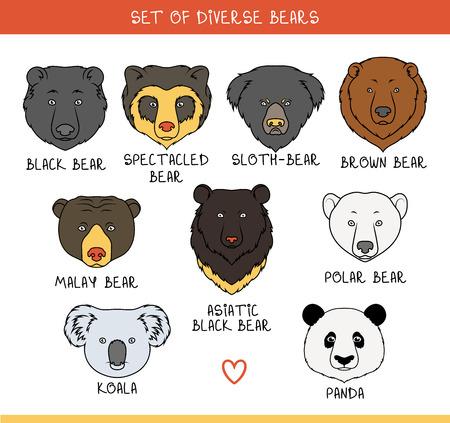 Set van 9 snuiten draagt handgemaakt in lineaire stijl. Gezichten van beren. Kleur beren. Rassen van beren. Soorten van beren. Amerikaanse zwarte beer. Dragen ingesteld. Brilbeer. Aziatische beer. Panda, koala