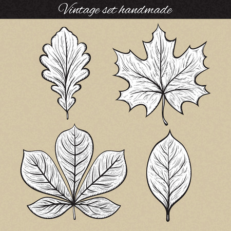 etched: Retro set of 4 leaf sketch handmade. Vintage leaves. Vintage leaves engraving. Leaves for frames and design. Retro design elements. Isolated detailed tree leaves. Oak and maple, chestnut and rowan