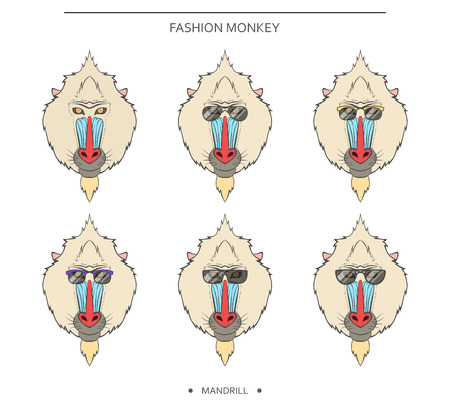 mandrill: Isolated color set of monkey muzzles in a linear style and in different glasses. Symbol of 2016 in the Chinese horoscope . Mandrill for design . Monkeys in hipster retro style. monkey head