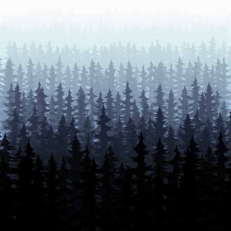 coniferous tree: Nature forest landscape pine fir. Nature forest pine trees