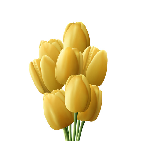 Flower tulip realistic isolated on white background. Bouquet of Yellow tulips Illustration