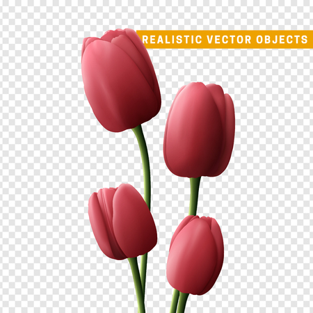 Flower tulip realistic isolated on transparent background. Bouquet of pink tulips