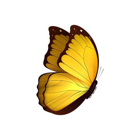Mariposa amarilla aislada sobre fondo blanco. Mariposas Insectos Lepidoptera Morpho amathonte. Emblema iconos ilustración vectorial Ilustración de vector