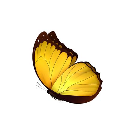 Mariposa amarilla aislada sobre fondo blanco. Mariposas Insectos Lepidoptera Morpho amathonte. Emblema iconos ilustración vectorial