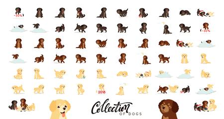 Set of cute dogs labrador and golden retriever.