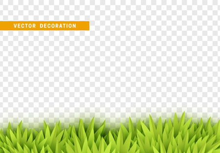 Grass, shape plant leaves border isolated with transparent background. Vector Illustration