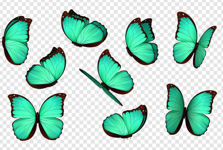 Butterfly vector. Blue isolated butterflies. Insects with bright coloring on transparent background Foto de archivo - 105172330