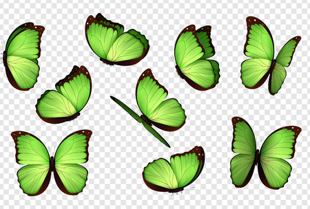 Butterfly vector. Green isolated butterflies. Insects with bright coloring on transparent background Illustration