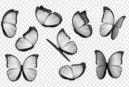 Butterfly white isolated vector.. Gray isolated butterflies. Insects with bright coloring on transparent background. Illustration