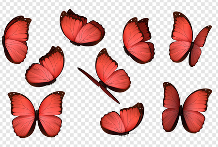 Red isolated butterflies. Insects with bright coloring. Butterfly vector. Illustration