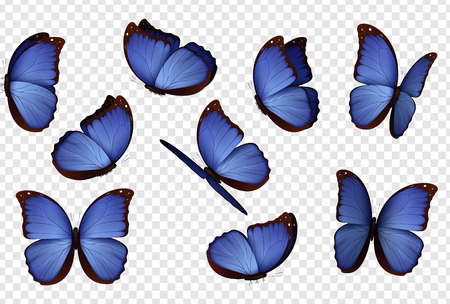 Butterfly vector. Purple isolated butterflies. Insects with bright coloring on transparent background Illustration