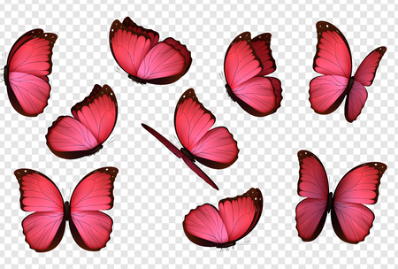 Butterfly vector. Pink isolated butterflies. Insects with bright coloring on transparent background Foto de archivo - 110864094