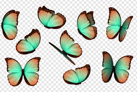 Butterfly vector. Colorful isolated butterflies. Insects with bright coloring on transparent background Illusztráció
