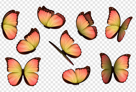 Butterfly vector. Colorful isolated butterflies. Insects with bright coloring on transparent background Illustration