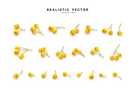 Set of realistic rowan berries, hawthorn, viburnum. vector illustration Vectores